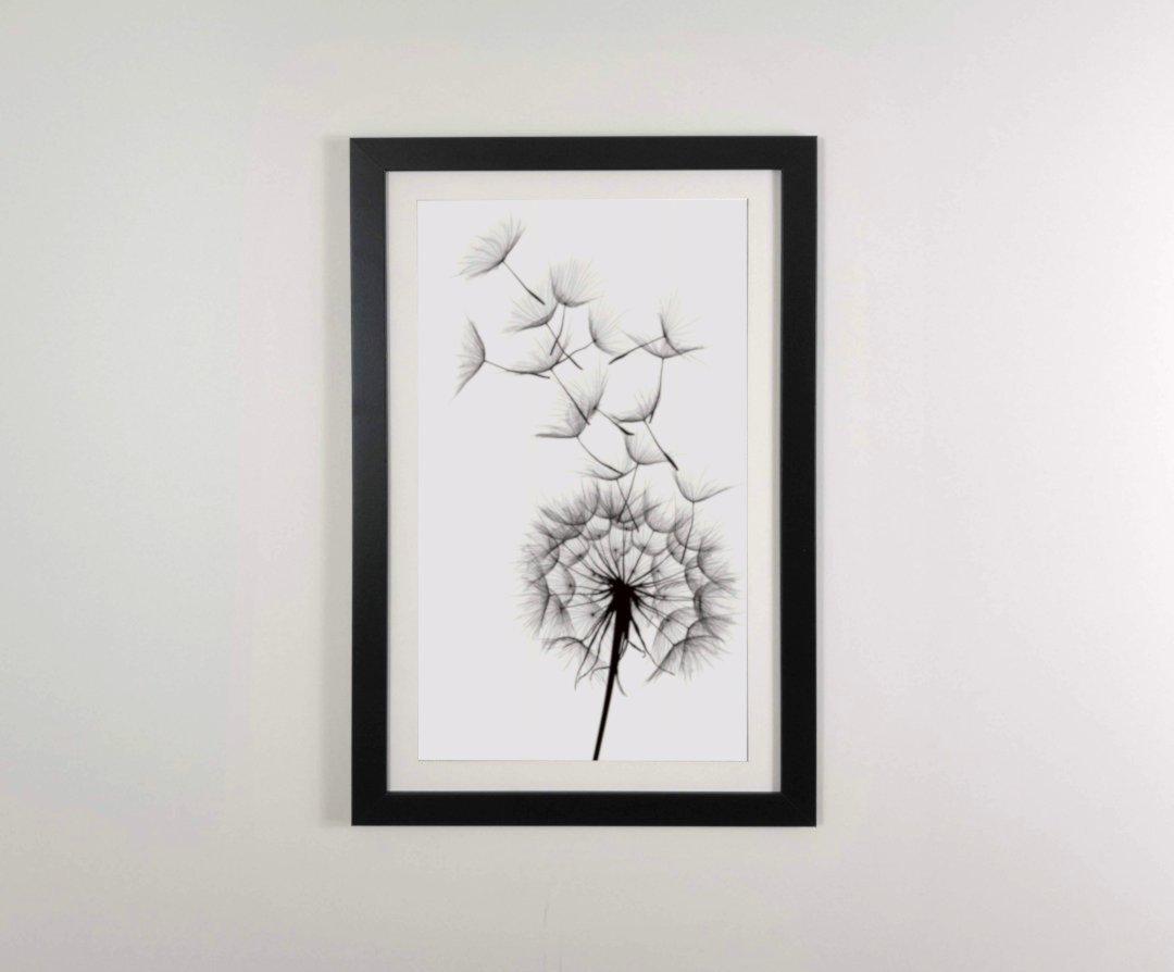 cuadro dandelion enmaracado en negro