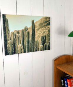 Foto ambiente cuadro cactus