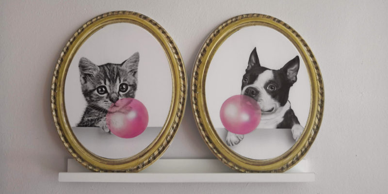 cuadro perro y gato